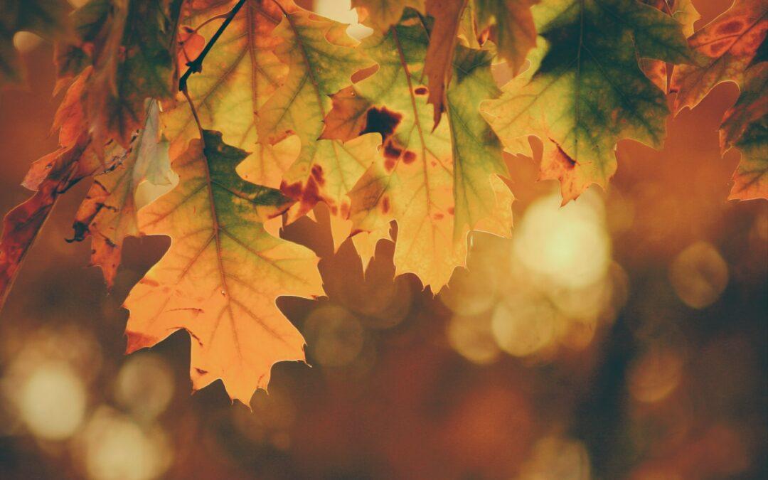 Ein Teil – unterschiedlicher Style: Herbstlook